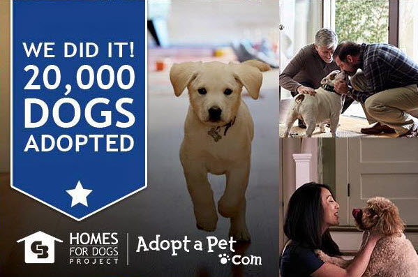 Coldwell Banker Adopt-a-Dog